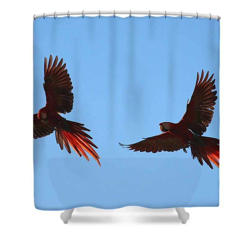 Scarlet Macaws Shower Curtain featuring the photograph Soaring by Lorraine Baum