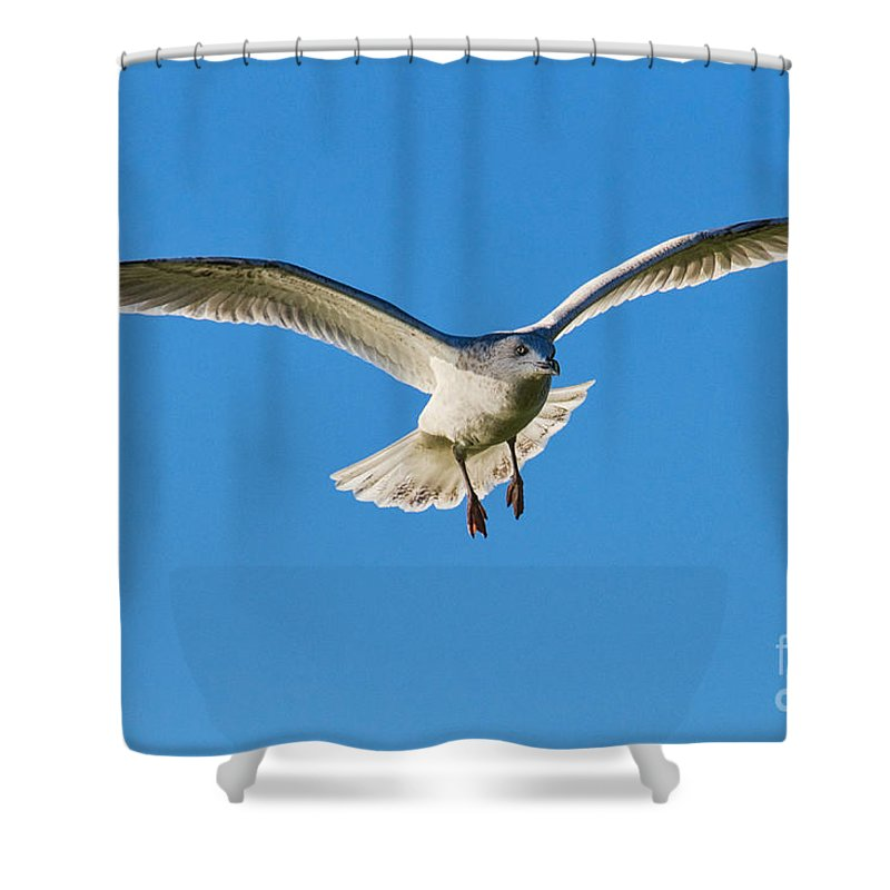 Gull Shower Curtain featuring the photograph Soaring by Susie Peek