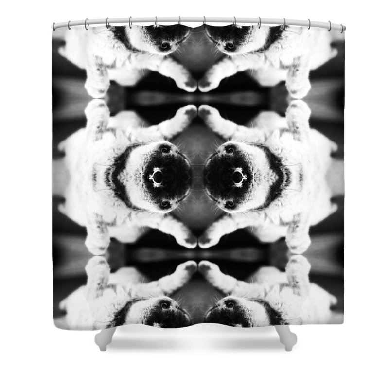 Chilling Shower Curtain featuring the photograph Soft And Fluffy Art Ornament by Yevgeni Kacnelson