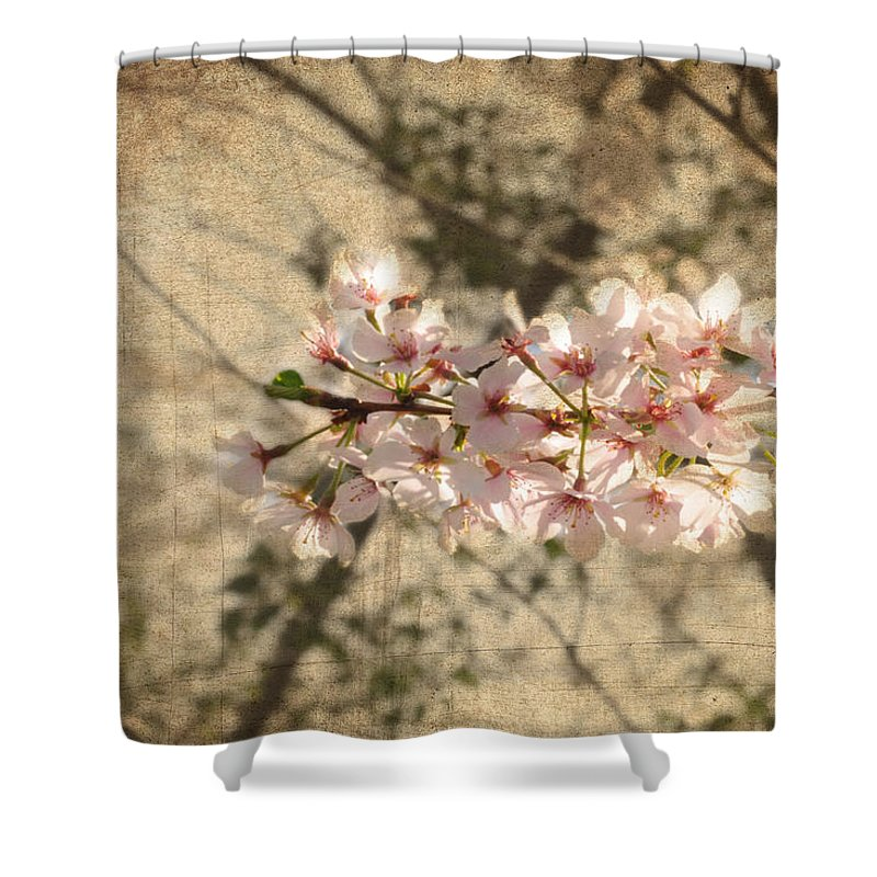 Popular Shower Curtain featuring the photograph Soft Caress Of Pink by Paulette B Wright