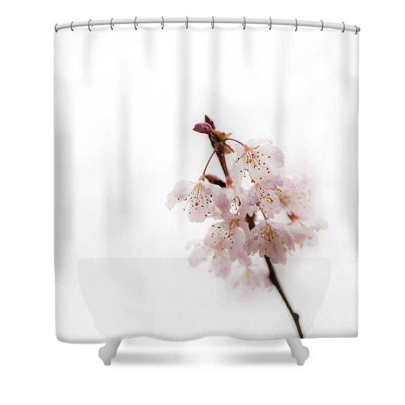 Floral Shower Curtain featuring the photograph Soft Cherry Plum by Anne Gilbert