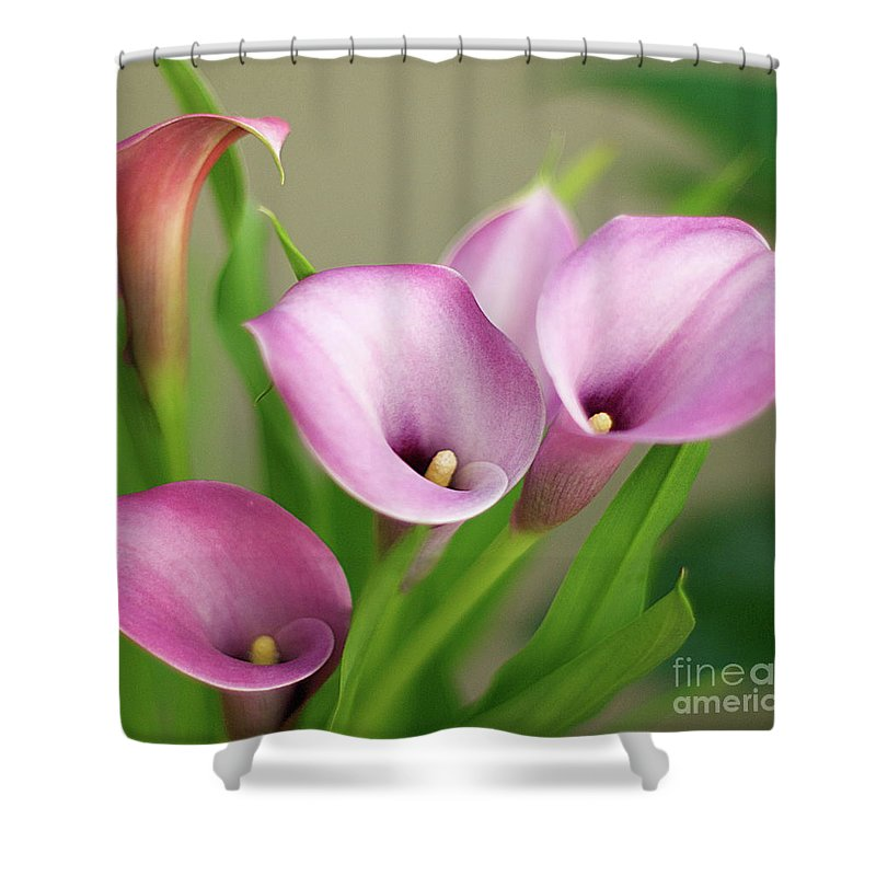 Calla Lily Shower Curtain Featuring The Photograph Soft Pink Lilies By Byron Varvarigos