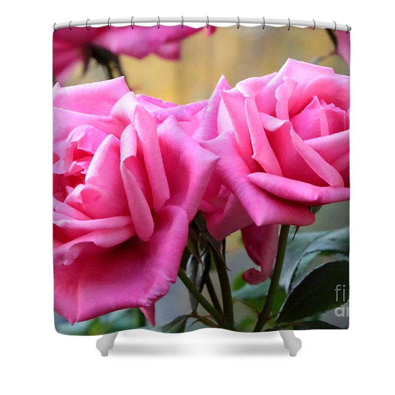 Roses Shower Curtain featuring the photograph Soft Pink Roses by Carol Groenen
