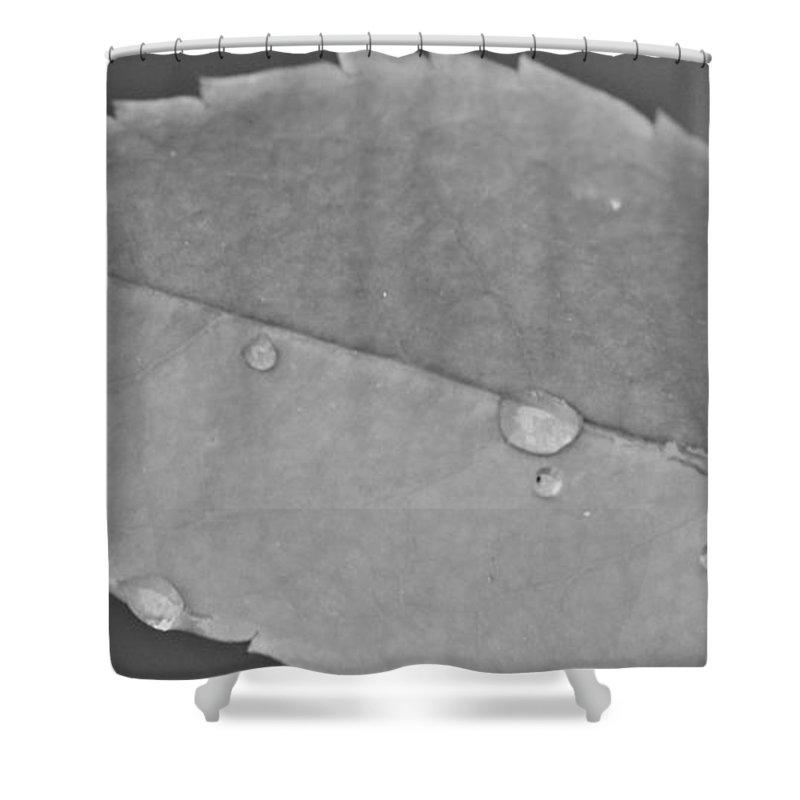 Soft Rain Shower Curtain featuring the photograph Soft Rain by Dan Sproul