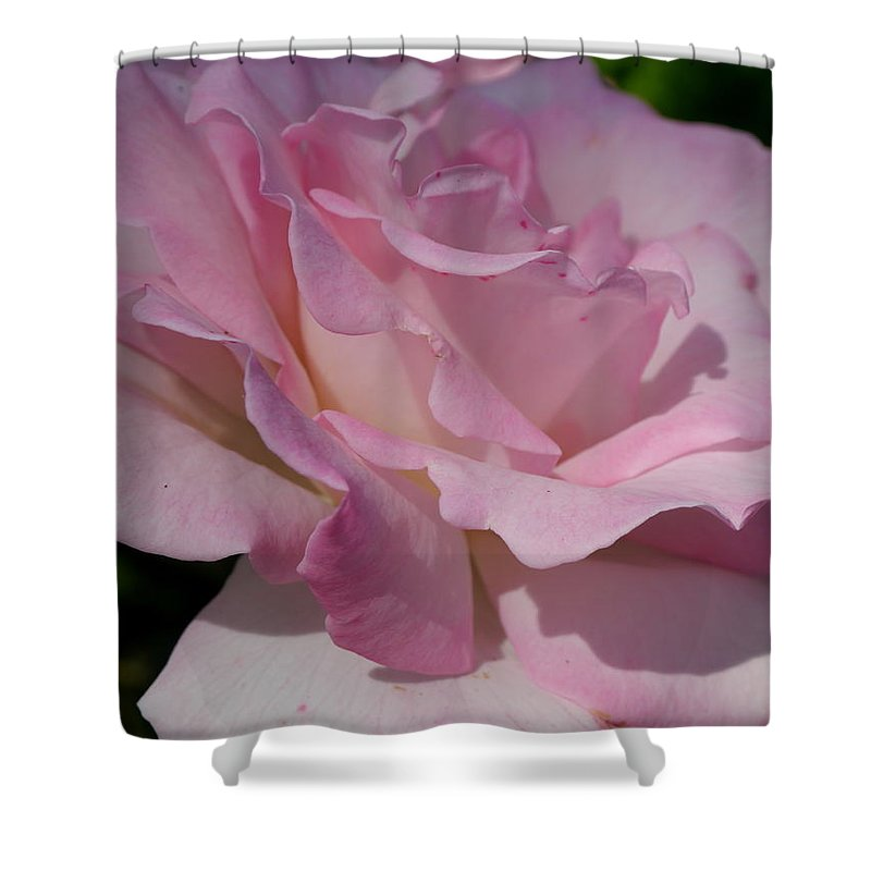 Pink Rose Shower Curtain featuring the photograph Soft Shade Of Pink by Christiane Schulze Art And Photography
