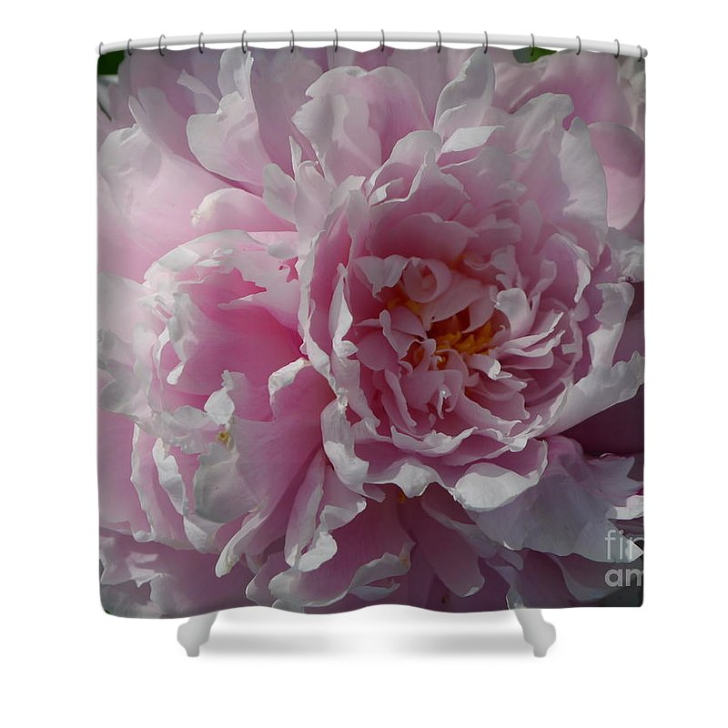 European Peony Shower Curtain featuring the photograph Soft Shades by Christiane Schulze Art And Photography