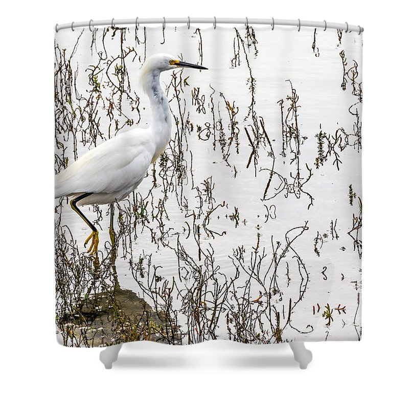 Bird Shower Curtain featuring the photograph Solitude by Kate Brown