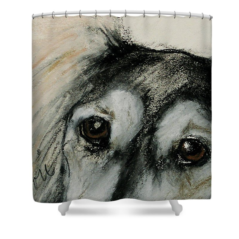 Saluki Shower Curtain featuring the drawing Sophia's Eyes by Cori Solomon