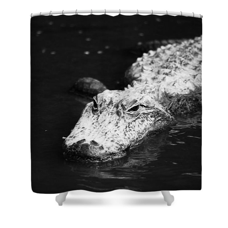 Becky Furgason Shower Curtain featuring the photograph #sorryaboutyourdamnluck by Becky Furgason