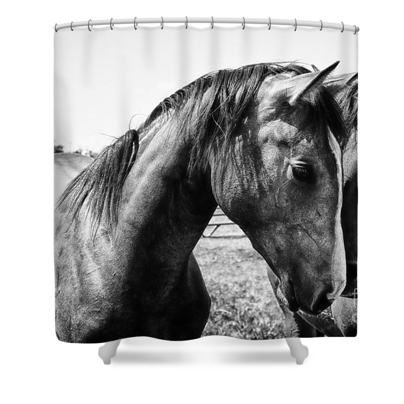 White Horse Shower Curtains