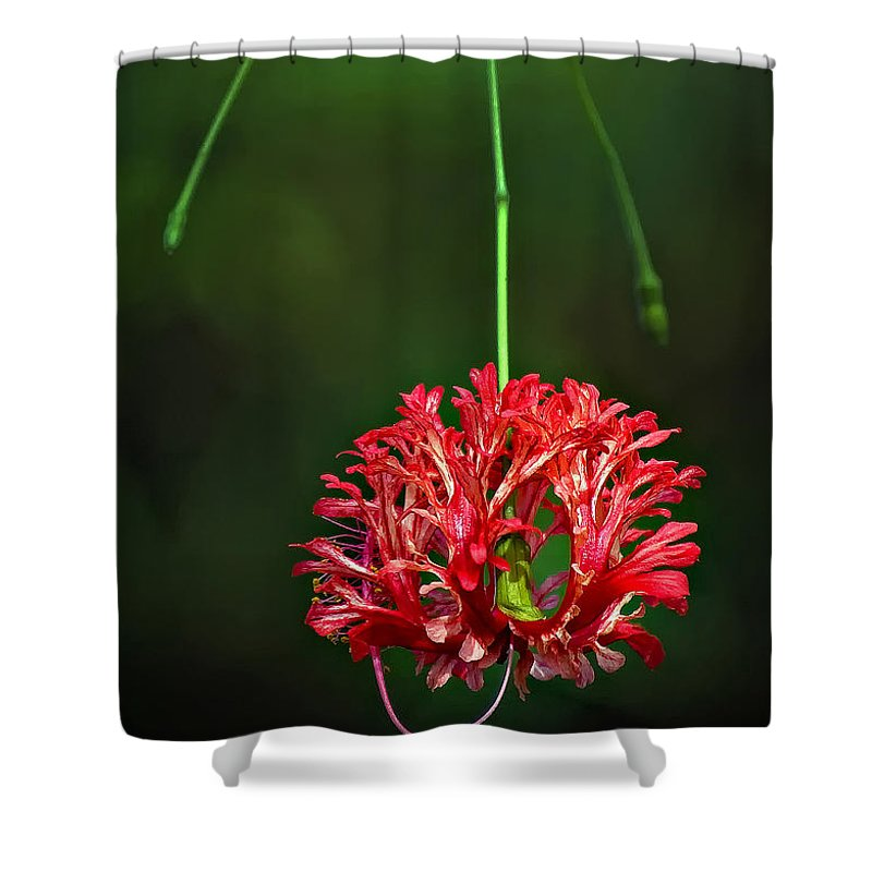 Flower Shower Curtain featuring the photograph Southern Belle by Steve Harrington
