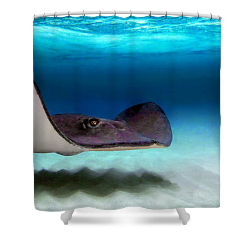 Southern Stingray Dasyatis Americana Shower Curtain for Sale by ...