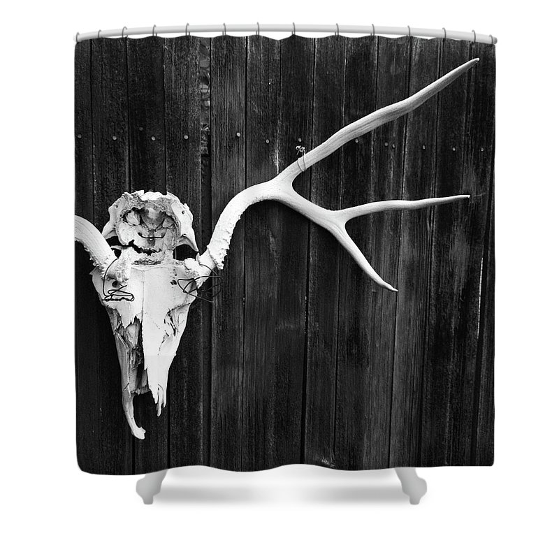 Animal Skull Shower Curtain featuring the photograph Southwest Americana by Amygdala imagery