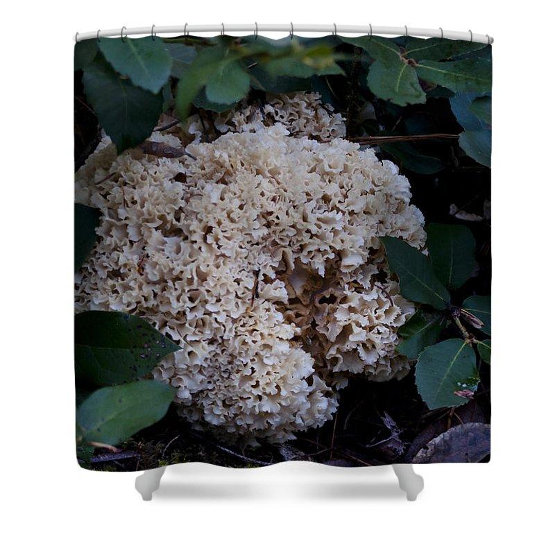 Cauliflower Mushroom Shower Curtain featuring the photograph Sparassis Crispa by Betty Depee