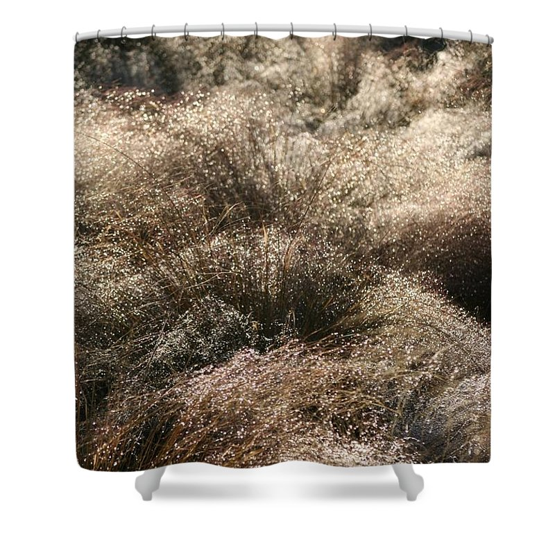 Grasses Shower Curtain featuring the photograph Sparkling Grasses by Nadine Rippelmeyer