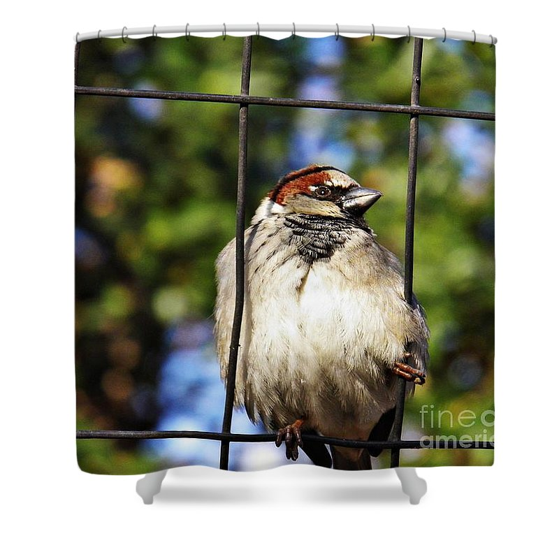 Sparrow On A Wire Fence Shower Curtain featuring the photograph Sparrow On A Wire Fence by Sarah Loft