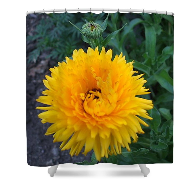 Floral Shower Curtain featuring the photograph Spiral by Jo Dawkins