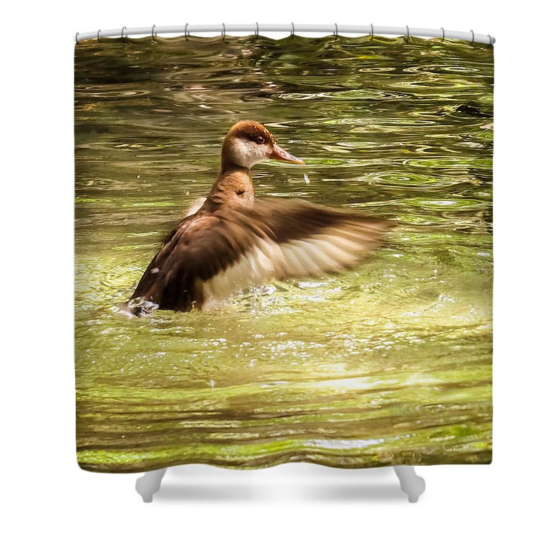 Duck Shower Curtain featuring the photograph Splashing In The Water by Zina Stromberg