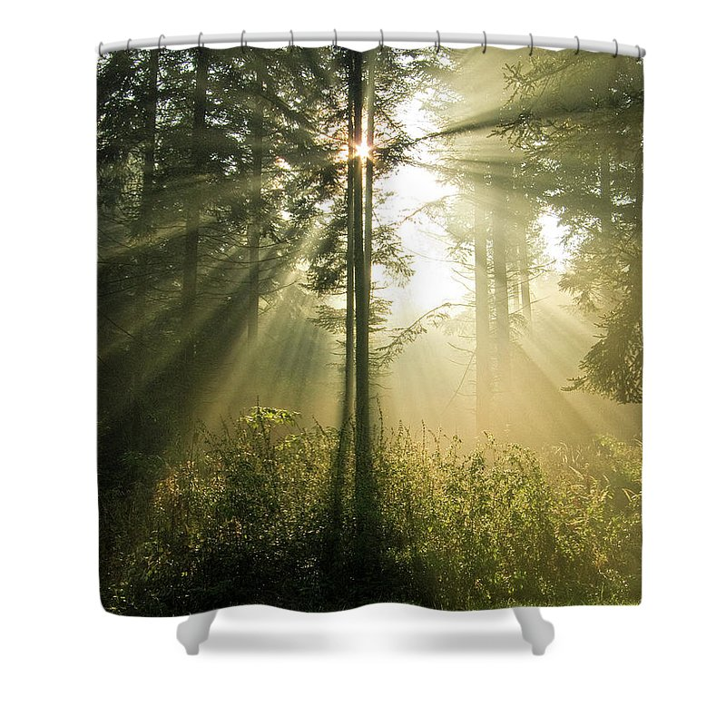 Nature Shower Curtain featuring the photograph Splendour by Daniel Csoka