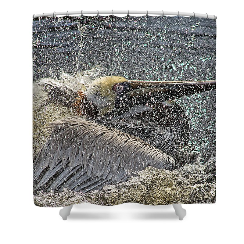 Wildlife Shower Curtain featuring the photograph Splish Splash by Kenneth Albin