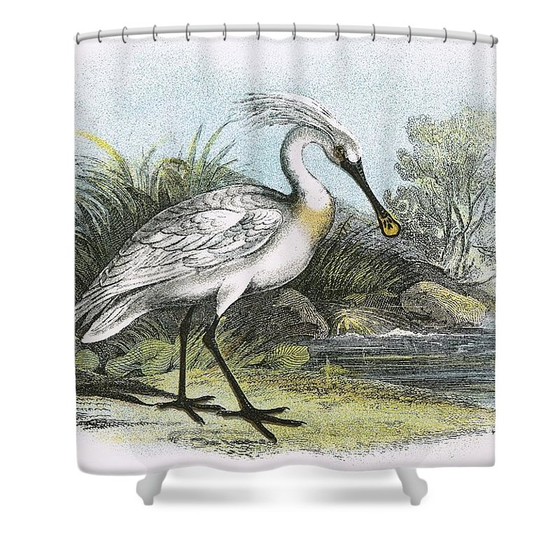 British Shower Curtain Featuring The Painting Spoonbill By English School