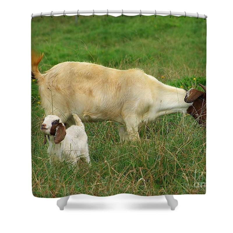 White Shower Curtain featuring the photograph Spring Born by Mary Deal