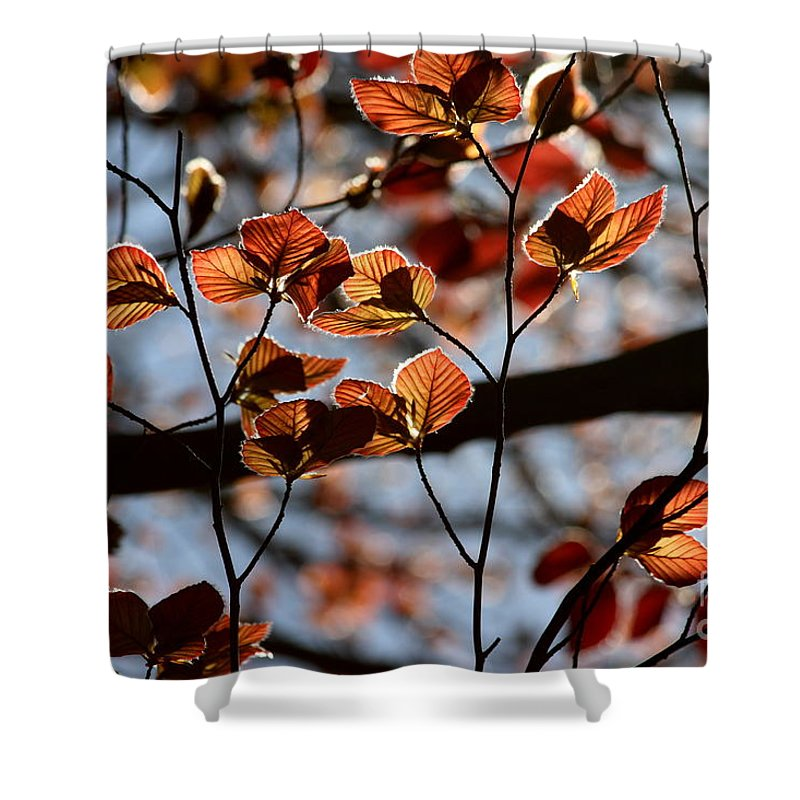Canopy Shower Curtain featuring the photograph Spring Canopy by Kenny Glotfelty