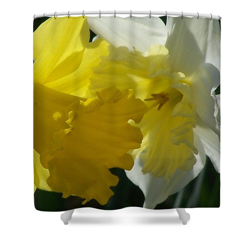 Flower Shower Curtain featuring the photograph Spring Daffodils by JMQE Studios