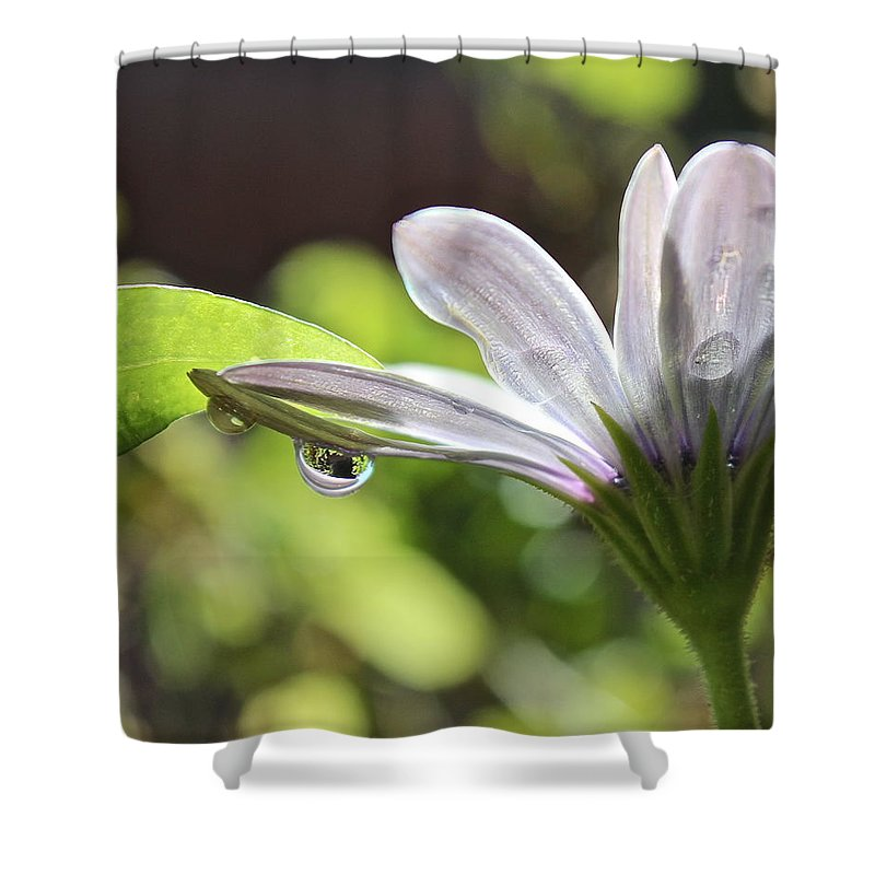 Spring Shower Curtain featuring the photograph Spring Flower by Kume Bryant