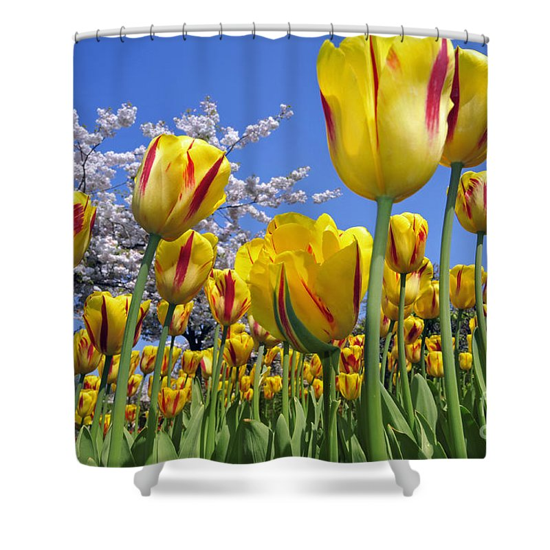 Colourful Shower Curtain featuring the photograph Spring Flowers 12 by Arterra Picture Library