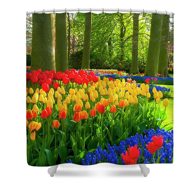 Flowerbed Shower Curtain featuring the photograph Spring Flowers In A Park by Jacobh