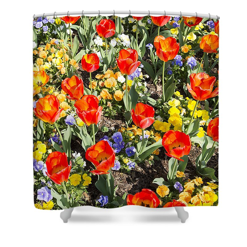 Spring Flowers Shower Curtain featuring the photograph Spring Flowers No. 2 by Greg Hager
