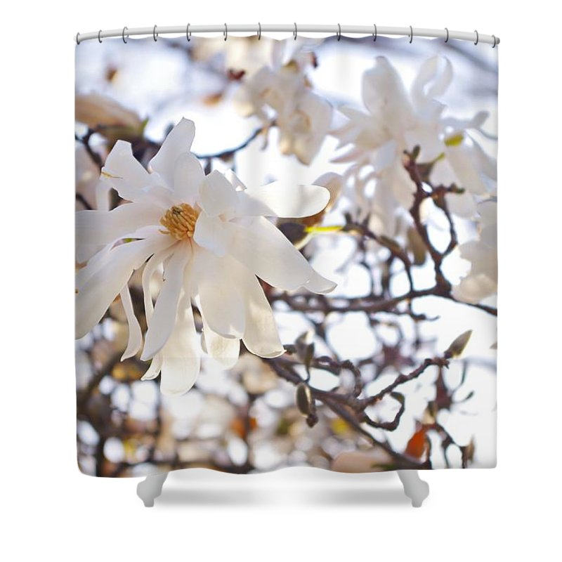 Magnolia Stellata Shower Curtain featuring the photograph Spring Flowers by Sharon Popek