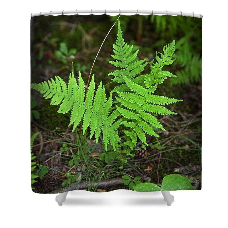 Fern Shower Curtain featuring the photograph Spring Has Sprung by John Stephens