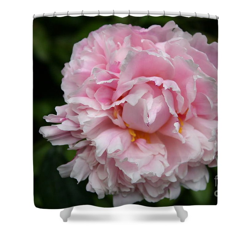 Peony Shower Curtain featuring the photograph Spring In Pink by Christiane Schulze Art And Photography