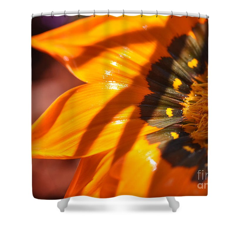 Gazania Shower Curtain featuring the photograph Spring Is Here by Chris Fleming