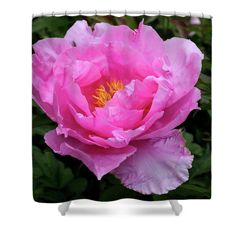 Peony Shower Curtain featuring the photograph Spring Passion by Christiane Schulze Art And Photography