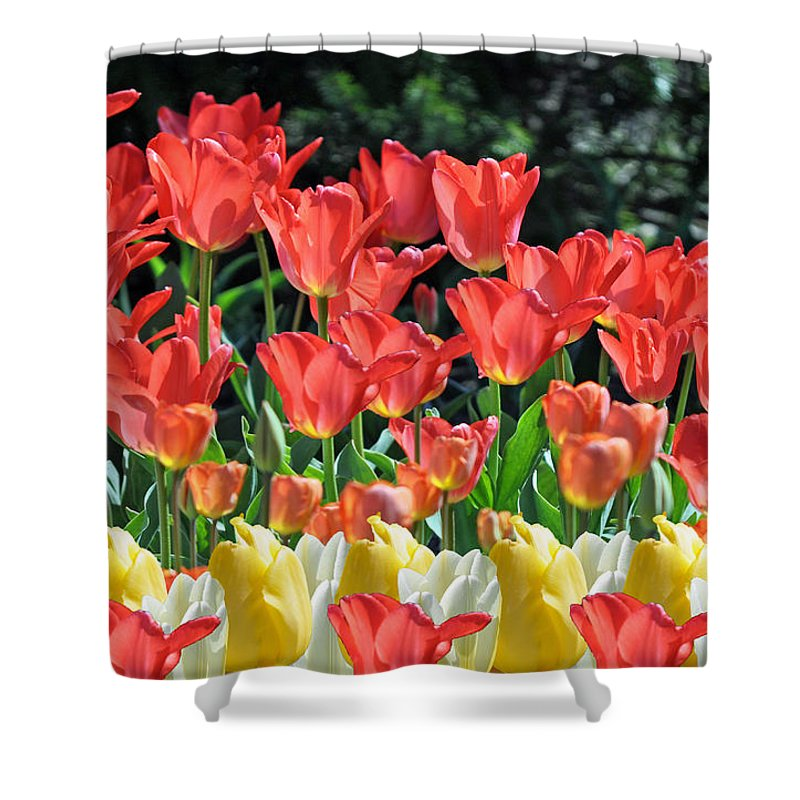 Tulips Shower Curtain featuring the photograph Spring Surprise by Debra Miller