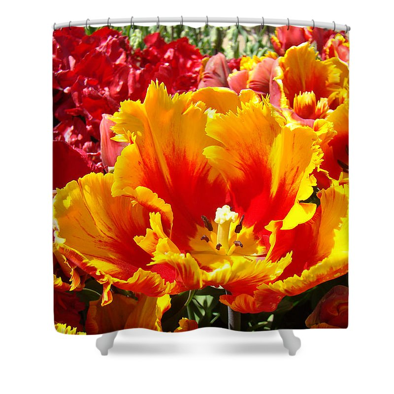 Yellow Shower Curtain featuring the photograph Spring Tulip Flowers Art Prints Yellow Red Tulip by Baslee Troutman