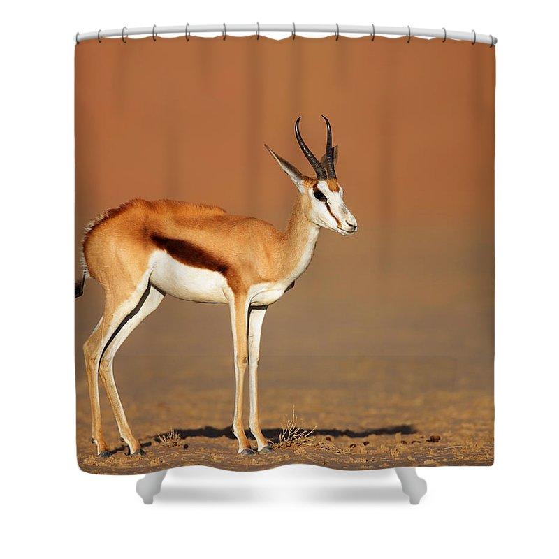 Springbok Shower Curtain featuring the photograph Springbok On Sandy Desert Plains by Johan Swanepoel