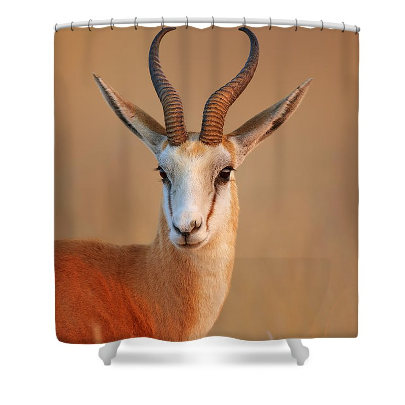 Wild Shower Curtain featuring the photograph Springbok Portrait by Johan Swanepoel