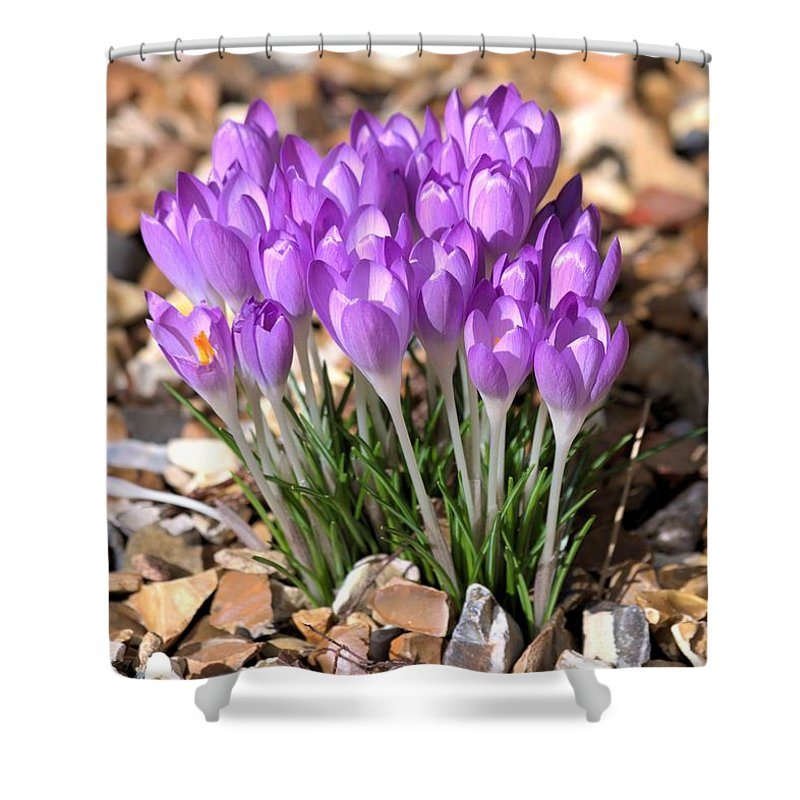Spring Flowers Shower Curtain featuring the photograph Springflowers by Gordon Auld