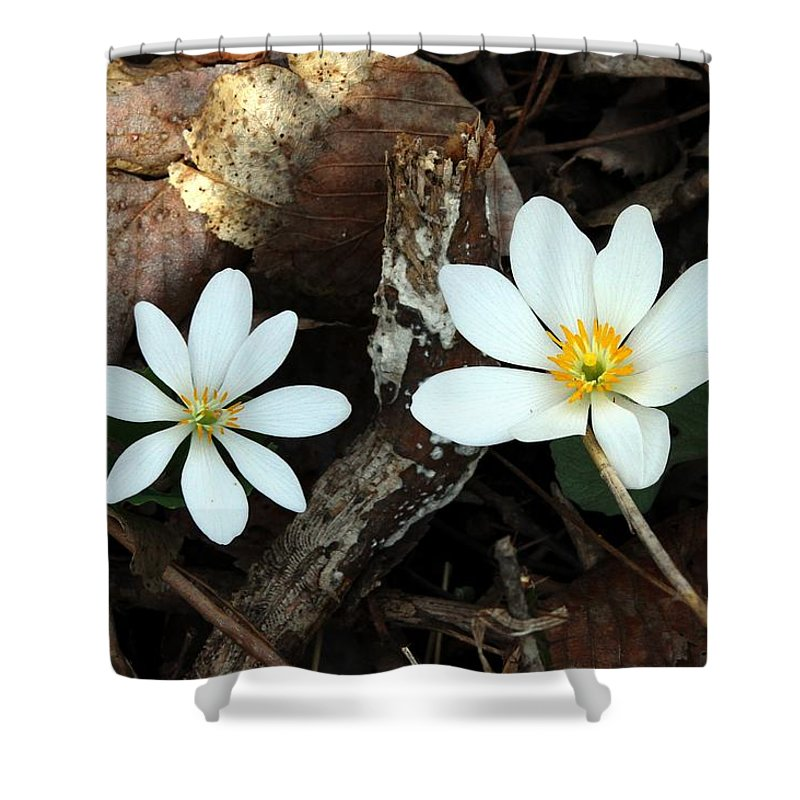 Blood Root Shower Curtain featuring the photograph Spring's Bloom by Elizabeth Winter