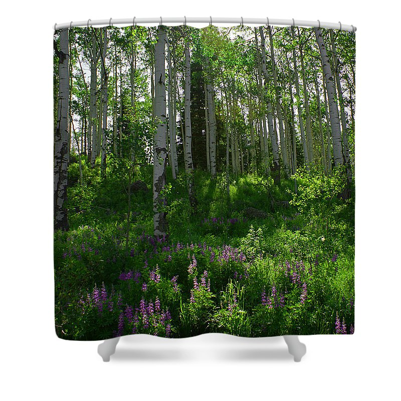 Aspens Shower Curtain featuring the photograph Springtime on the Grand Mesa by Ernie Echols
