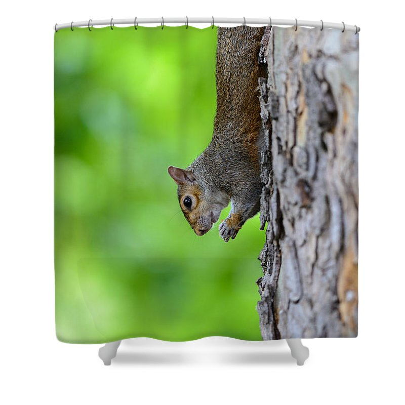 Squirrel Shower Curtain featuring the photograph Squirrel In A Tree by Matt Malloy