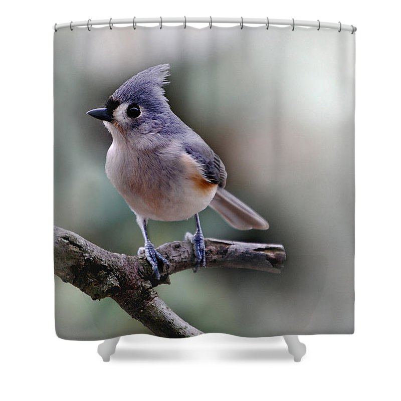 Bird Shower Curtain featuring the photograph Spring Time Titmouse by Skip Willits