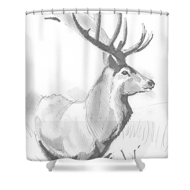 Stag Shower Curtain featuring the drawing Stag Drawing by Mike Jory