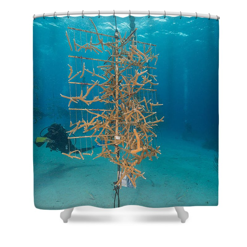 Staghorn Coral Restoration Project Shower Curtain featuring the photograph Staghorn Coral Restoration Project by Andrew J. Martinez