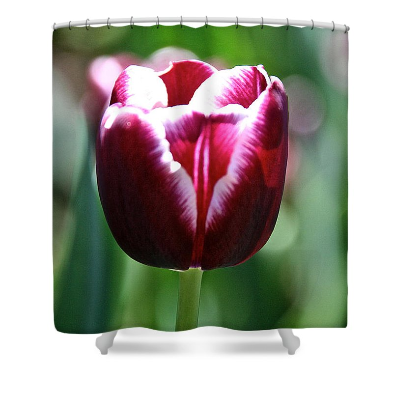 Flower Shower Curtain featuring the photograph Stand And Shout by Susan Herber