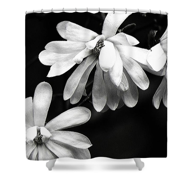 Carol R Montoya Shower Curtain featuring the photograph Star Magnolia In Black And White by Carol Montoya